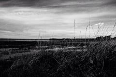 在海滨的草 库存图片