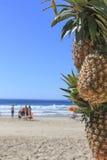 在海滩的菠萝 免版税图库摄影