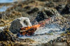 在海滩的营火 免版税库存照片
