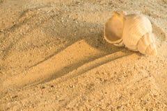在海滩的蜗牛 库存照片