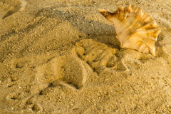 在海滩的蜗牛 免版税库存照片