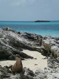 在海滩的蜥蜴 免版税图库摄影