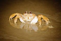 在海滩的螃蟹与反射 免版税库存图片