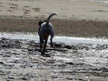 在海滩的行动 免版税库存图片