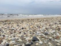 在海滩的被弄脏的壳 免版税库存照片