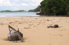 在海滩的被脱水的椰子 免版税库存图片