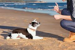 在海滩的训练狗 免版税图库摄影