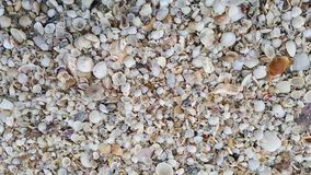 在海滩的许多壳 库存照片