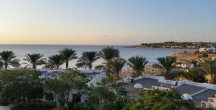 在海滩的许多棕榈 免版税库存照片