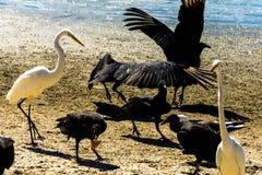 在海滩的许多鸟 免版税库存照片