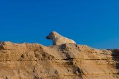 在海滩的设德蓝群岛牧羊犬 库存图片