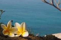 在海滩的赤素馨花花 免版税库存照片