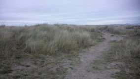 在海滩的路 库存图片