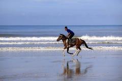 在海滩的连续马 免版税库存图片