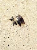 在海滩的钳位 库存图片