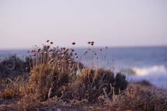 在海滩的面粉 免版税图库摄影