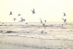 在海滩的飞行海鸥 免版税库存照片