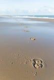 在海滩的马鞋子 免版税库存图片