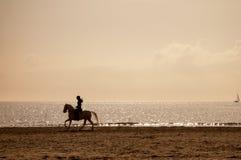 在海滩的马骑术剪影 库存照片