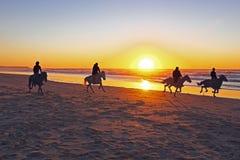 在海滩的马骑术 库存图片