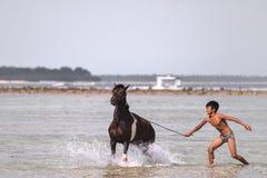 在海滩的马 免版税库存图片