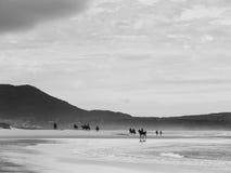在海滩的马 免版税库存照片