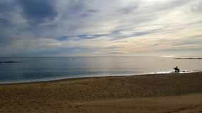 在海滩的马 库存照片