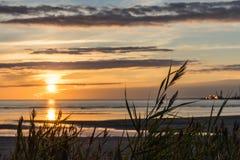 在海滩的高草在日落 库存照片