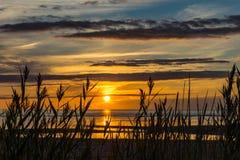 在海滩的高草在日落 库存图片