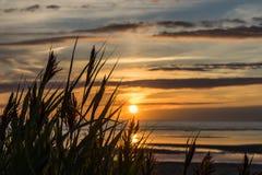 在海滩的高草在日落 免版税库存图片