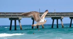 在海洋的鸟飞行 免版税库存照片