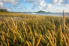 在海滩的麦子 免版税图库摄影