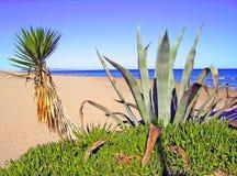 在海滩的仙人掌 库存照片
