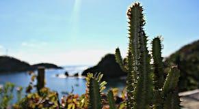 在海滩的仙人掌 免版税库存照片