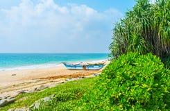 在海滩的绿叶 免版税库存照片