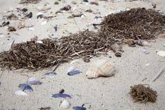 在海滩的贝壳与海草 库存图片