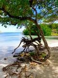 在海滩的结构树 库存图片