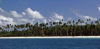 在海滩的结构树 免版税库存照片