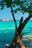 在海滩的结构树 库存照片