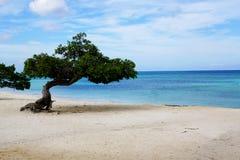 在海滩的结构树 免版税图库摄影