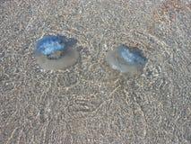 在海水的水母 免版税库存照片