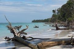 在海滩的死的树在蓬塔曼萨尼约角,哥斯达黎加 库存图片