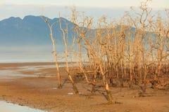 在海滩的死的树处于低潮中 免版税库存图片