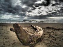 在海滩的死的树枝 免版税库存图片