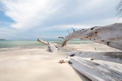 在海滩的死的树 免版税库存照片