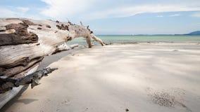 在海滩的死的树 免版税库存图片