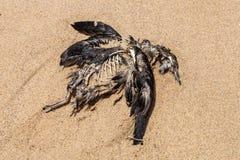 在海滩的死的海鸟 免版税库存照片