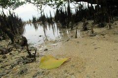 在海滩的黄色叶子 免版税库存图片