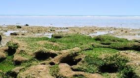 在海滩的绿色岩石 库存图片