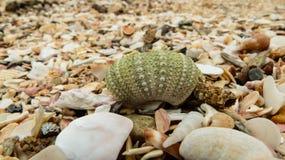 在海滩的绿色打破的壳壳 免版税图库摄影